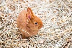 一点棕色兔宝宝 库存照片