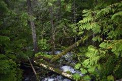 一点森林小河 免版税图库摄影