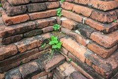 一点植物在砖增长 库存照片