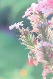 一点植物 免版税图库摄影