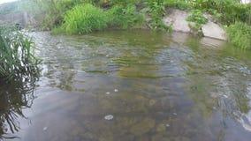 一点水小河在晴天 股票录像