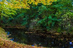 一点河在公园 免版税图库摄影