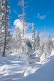 一点河在用雪盖的森林里 库存照片