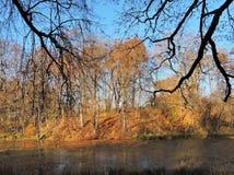 一点湖和美丽的树,立陶宛 免版税库存图片