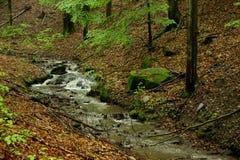 一点溪在森林里 图库摄影