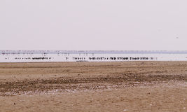 一点火鸟群在娜塔鸟Santuary 免版税库存照片
