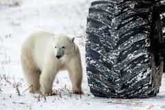 一点熊或重要人物? 免版税图库摄影
