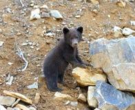 一点熊 免版税库存图片