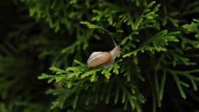 一点爬行在分支的蜗牛 股票录像