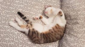 一点猫睡觉 库存图片