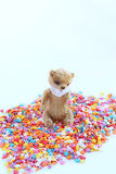 一点玩具熊坐一个五颜六色的糖果店顶部 软的焦点,轻的口气,特写镜头 库存照片
