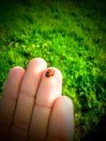 一点甲虫 库存图片