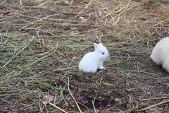 一点白色兔宝宝 免版税库存图片
