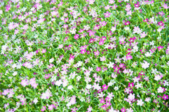 一点紫罗兰色花 库存图片