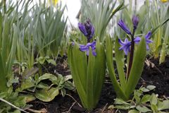 一点紫色flovers在春天 库存图片