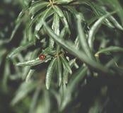 一点红色瓢虫坐绿色叶子 免版税库存图片