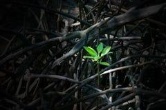 一点绿色树植物,在木森林的成长 库存照片