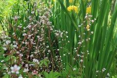 一点草甸在绿草背景开花设计的 免版税库存图片