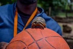 一点草龟 库存图片
