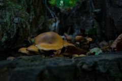 一点蘑菇家庭在树底部的 库存图片