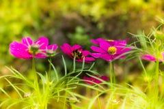 一点蜂蜜蜂 图库摄影