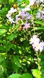 一点蜂蜜蜂 免版税图库摄影