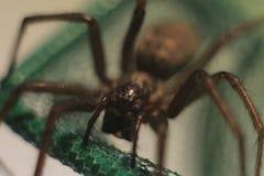 一点蜘蛛在野生生物居住 免版税库存照片