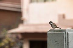 一点街道鸟 库存照片