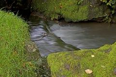一点起波纹的溪 免版税库存图片