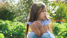 一点逗人喜爱的女孩在她的手和微笑上拿着草莓 股票视频