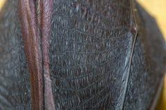 一点马蹄型蝙蝠& x28; Rhinolophus hipposideros& x29;翼 免版税库存图片