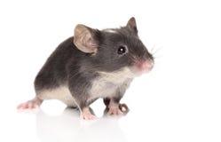 一点鼠标摆在 免版税库存图片
