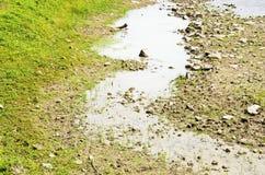 一点水在池塘第二 免版税库存图片