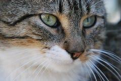 一点`老虎`猫放松 免版税库存图片