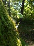 一点绿色叶子 库存照片