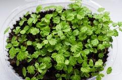 一点绿色种子 库存照片