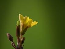 一点黄色花 库存图片