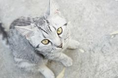 一点cat& x27; s眼睛,选择聚焦 免版税图库摄影
