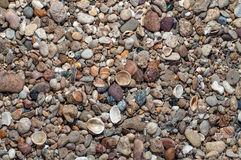 一点Seasheel 库存图片