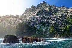 一点Skellig海岛、家许多各种各样的海鸟的和第二大gannets殖民地在世界上,凯里郡,爱尔兰 库存图片