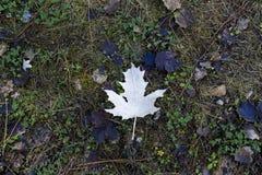 一片下落的叶子的下面在秋天 库存图片