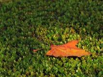 一片下落的叶子 库存图片