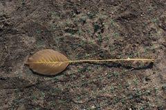 一片不同干燥叶子视线内 库存照片