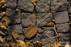 一片不同干燥叶子视线内 免版税图库摄影