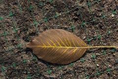 一片不同干燥叶子视线内 免版税库存图片