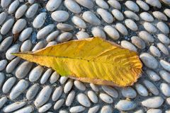 一片不同干燥叶子视线内 图库摄影