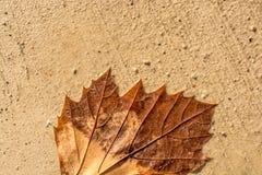 一片不同干燥叶子视线内 免版税库存照片