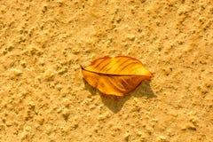 一片不同干燥叶子视线内 库存图片