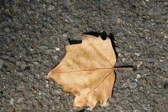 一片不同干燥叶子 免版税库存照片