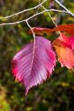 一片不同干燥叶子 库存图片